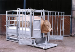 Cattle Crushes Cattle Equipment Rob Goddard Fencing