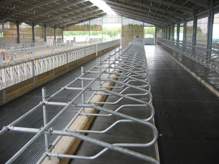 Cattle Cubicle Housing Cattle Equipment Rob Goddard